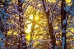December Blues and Golds by John Polzer